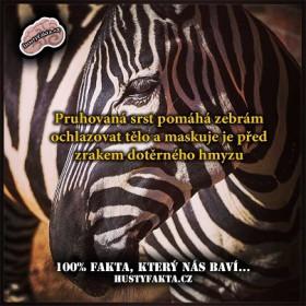 Proč je zebra pruhovaná?