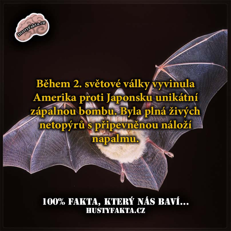 Fakt81