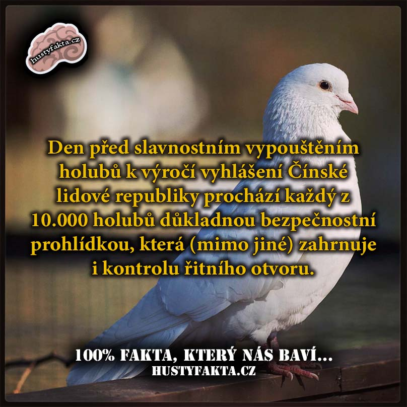 Fakt85