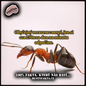 Spánek mravenců