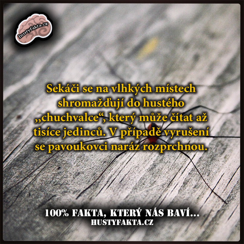Fakt96